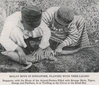 Malay Boys in Singapore, Playing with Tree Lizard
