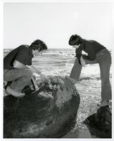 Students looking at rock in water