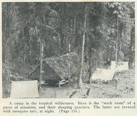 A Camp in the Tropical Wilderness