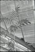 Interior of greenhouse and plant