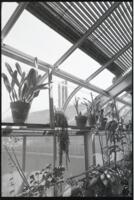 Interior of greenhouse and plants
